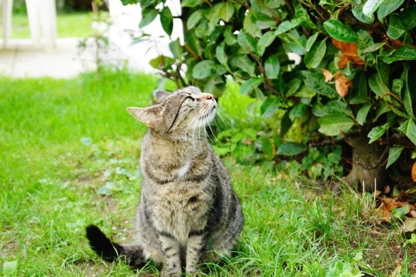 cat in garden_Piqsels