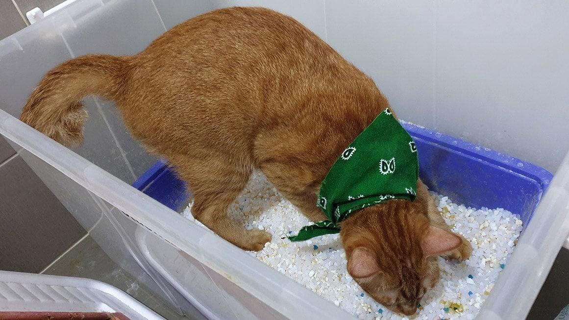 cat in storage container