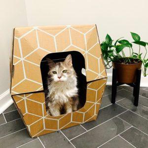 cat inside Cats Desire Disposable Litter Box