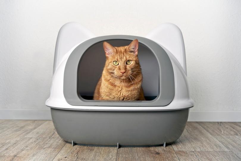 cat litter box_Lightspruch_Shutterstock