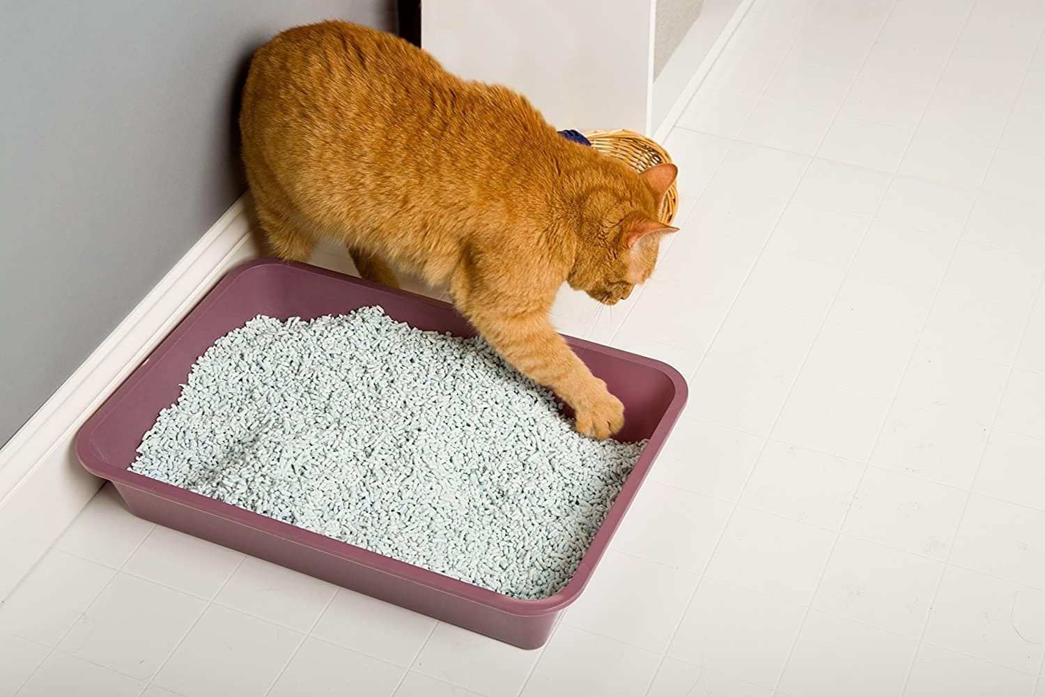 cat playing with HARTZ Multi-Cat Clumping Paper Litter