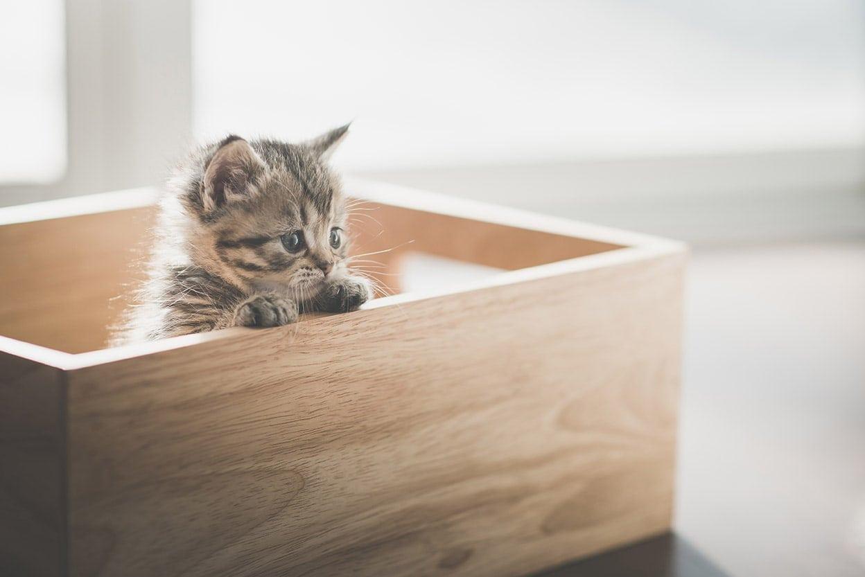 kitten in wooden box