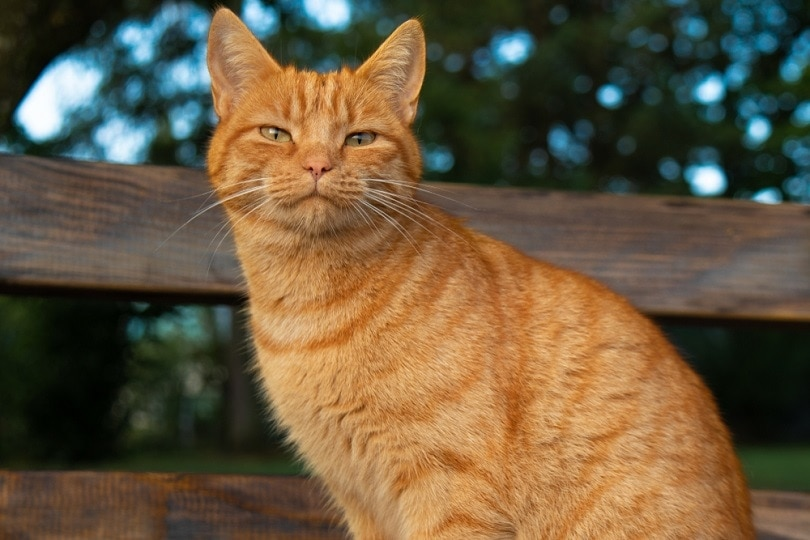 orange-cat_redwineandyou_shutterstock