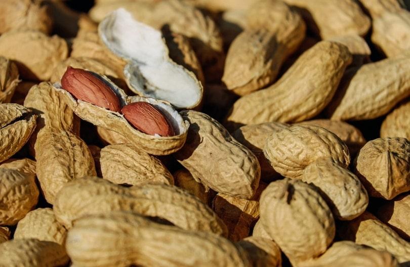 peanuts_Couleur_Pixabay