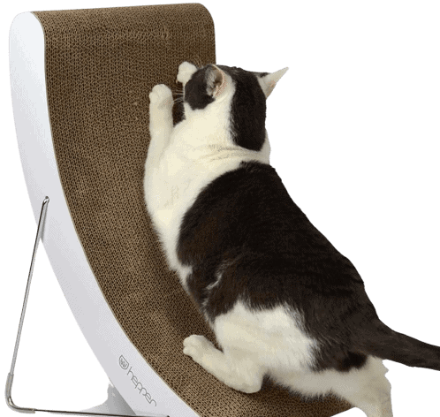 Cat Scratcher