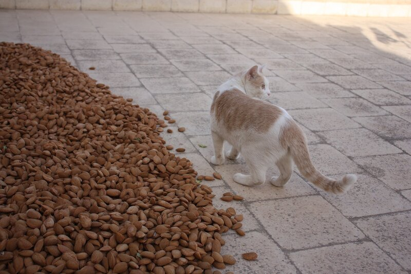 cat_almond_pile_pixabay outside