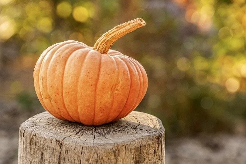 pumpkin on a cut tree trunk