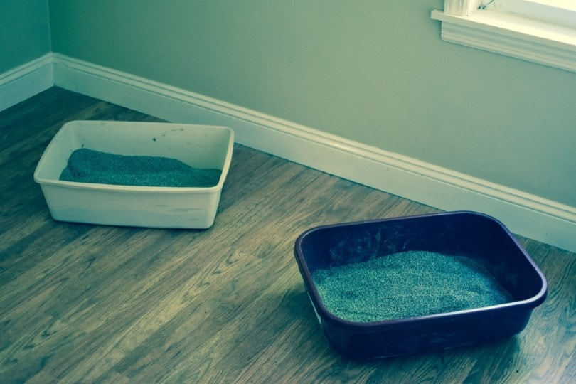 two cat litter boxes on wood floor indoors